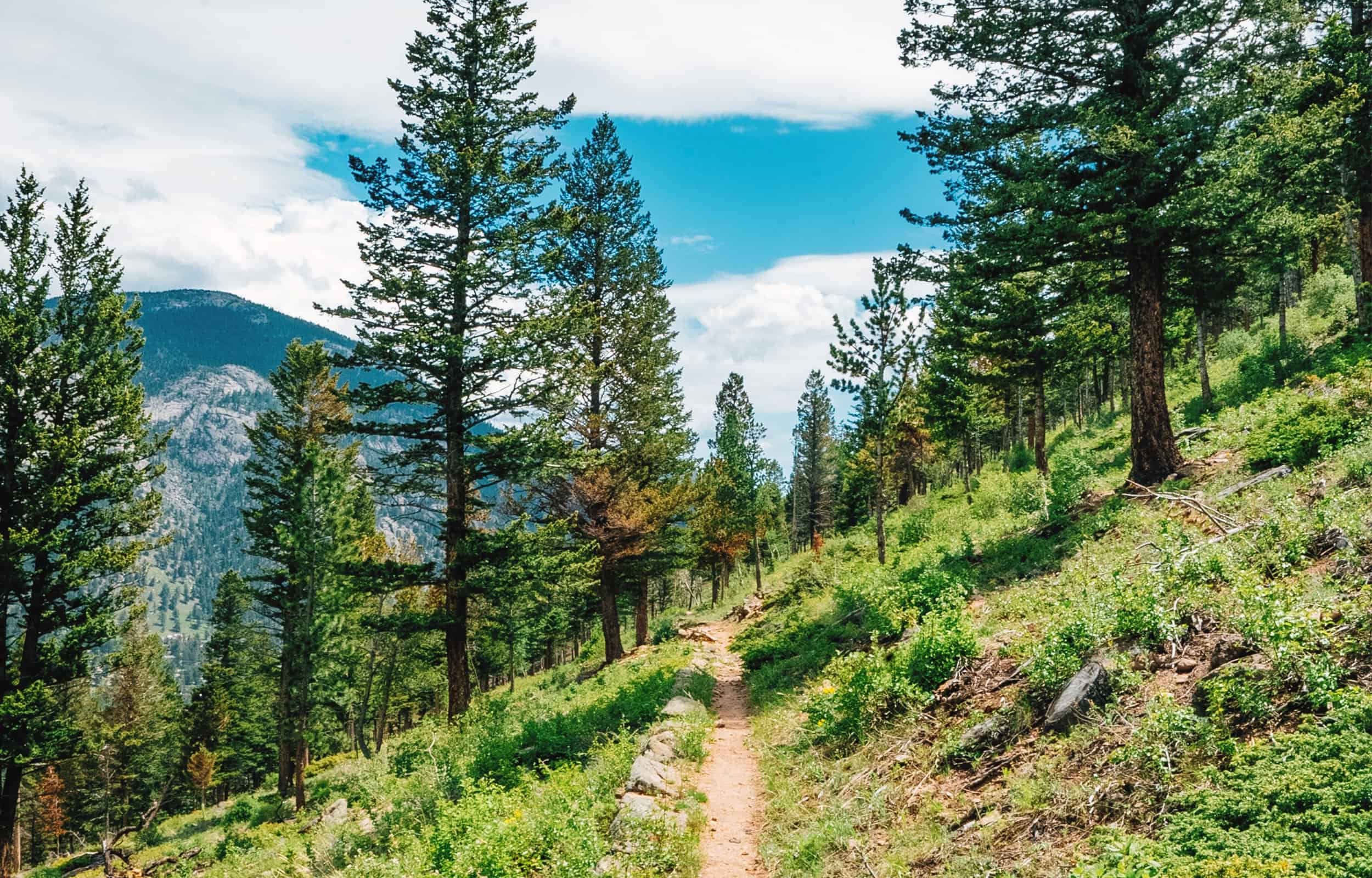 trail looking towards alpine trees and mountain
