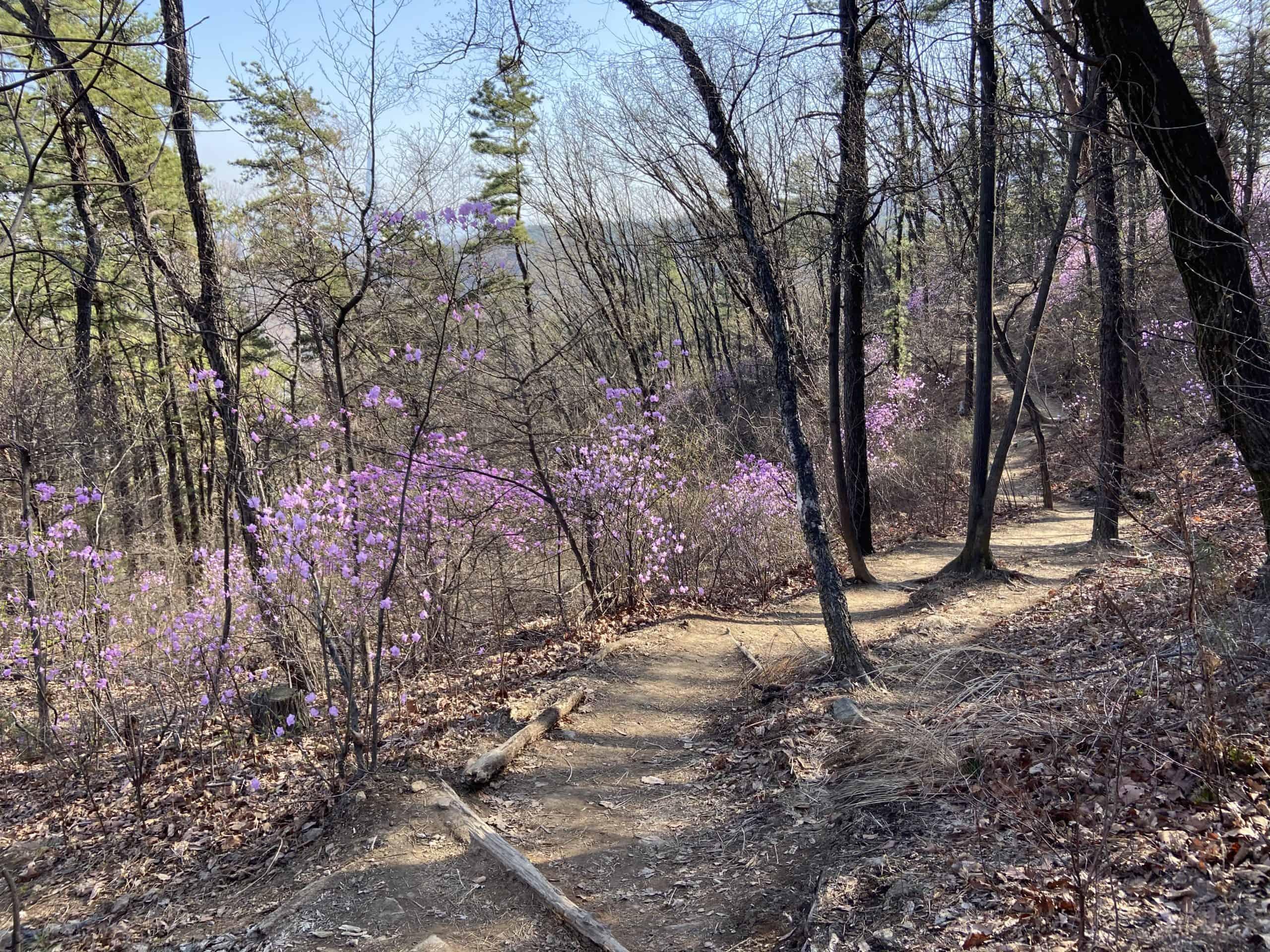 seoul trail