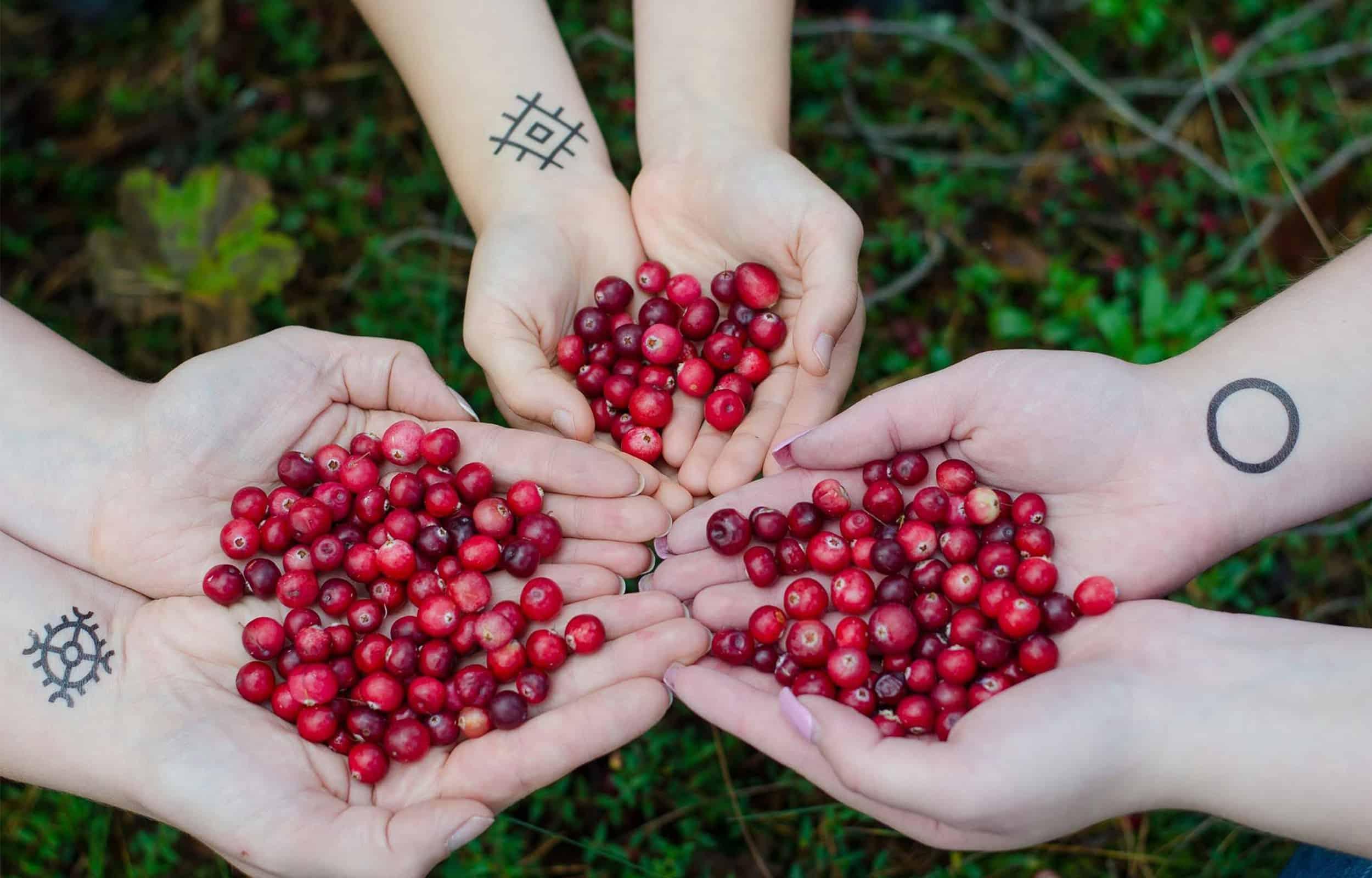 palms holding cranberries