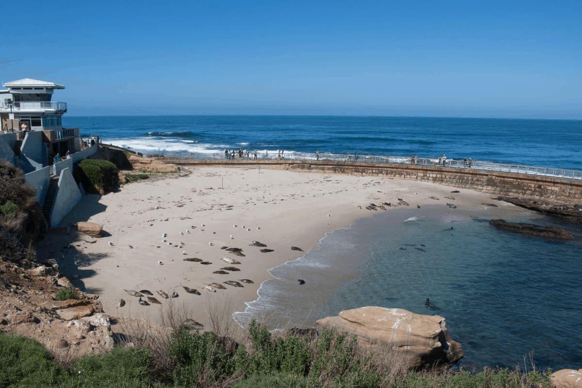 La Jolla San Diego Snorkeling seals