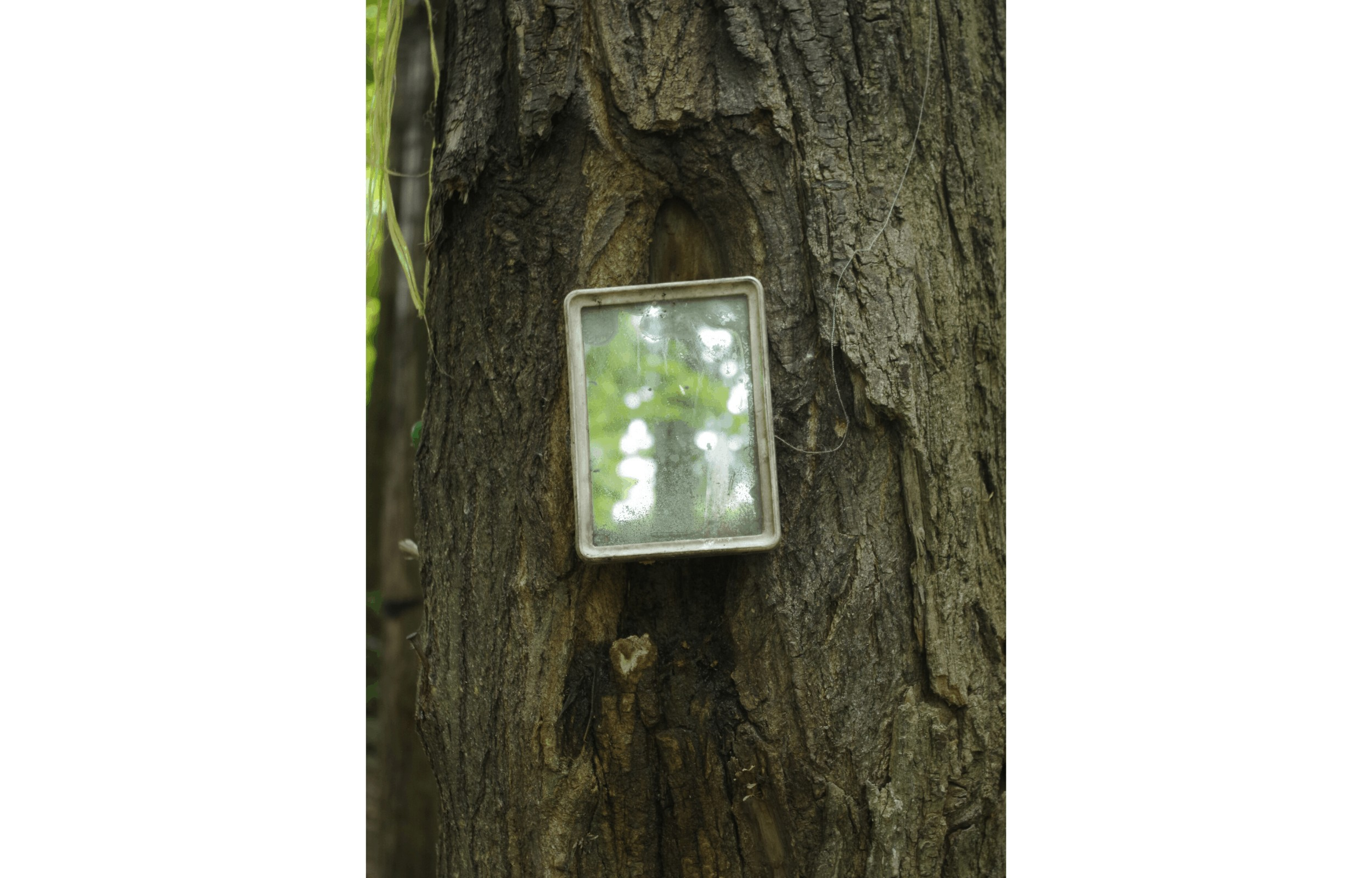 mirror hanging on a tree