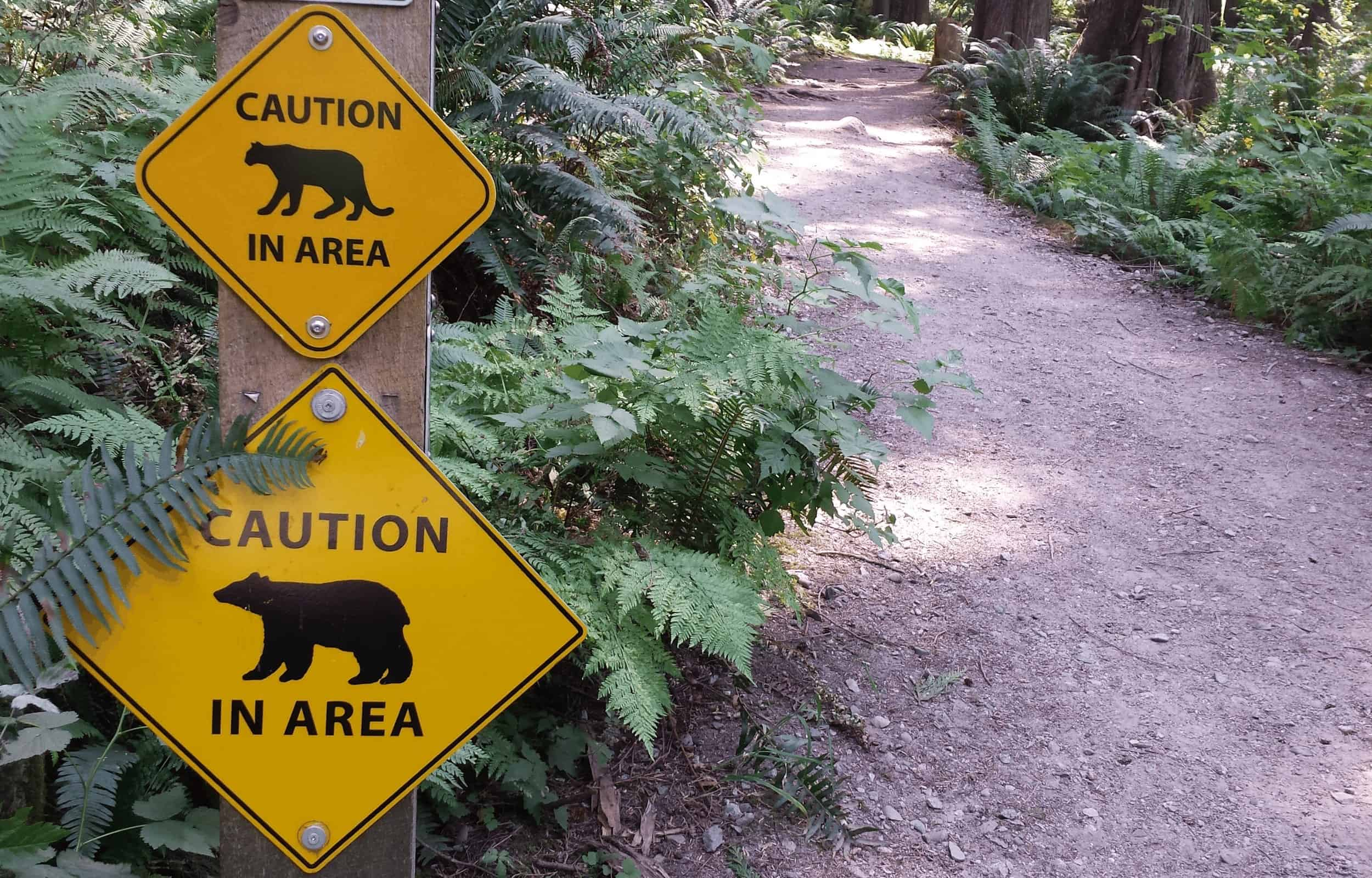 solo hiking safety animals hiking alone