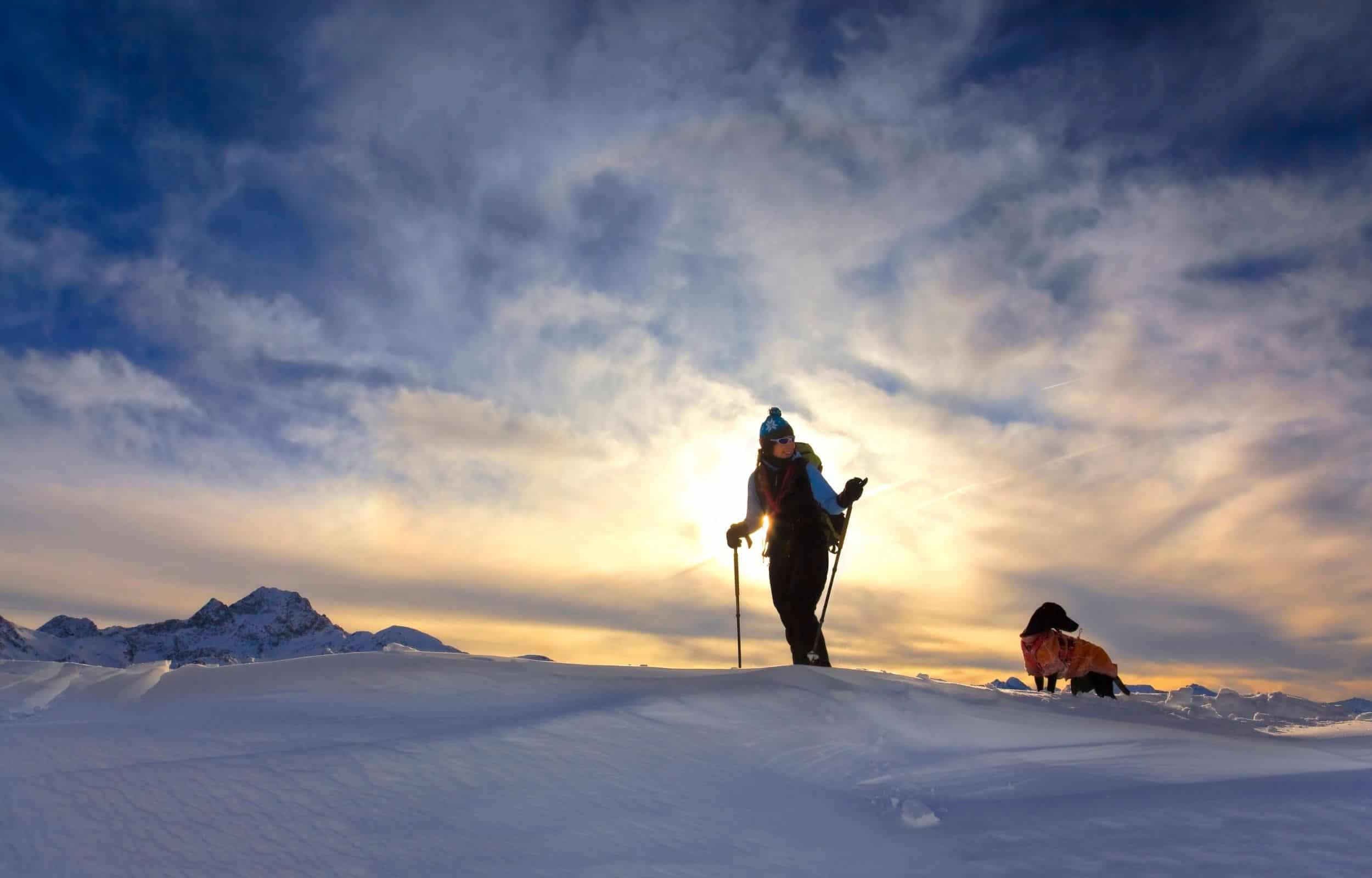 snowshoeing dog