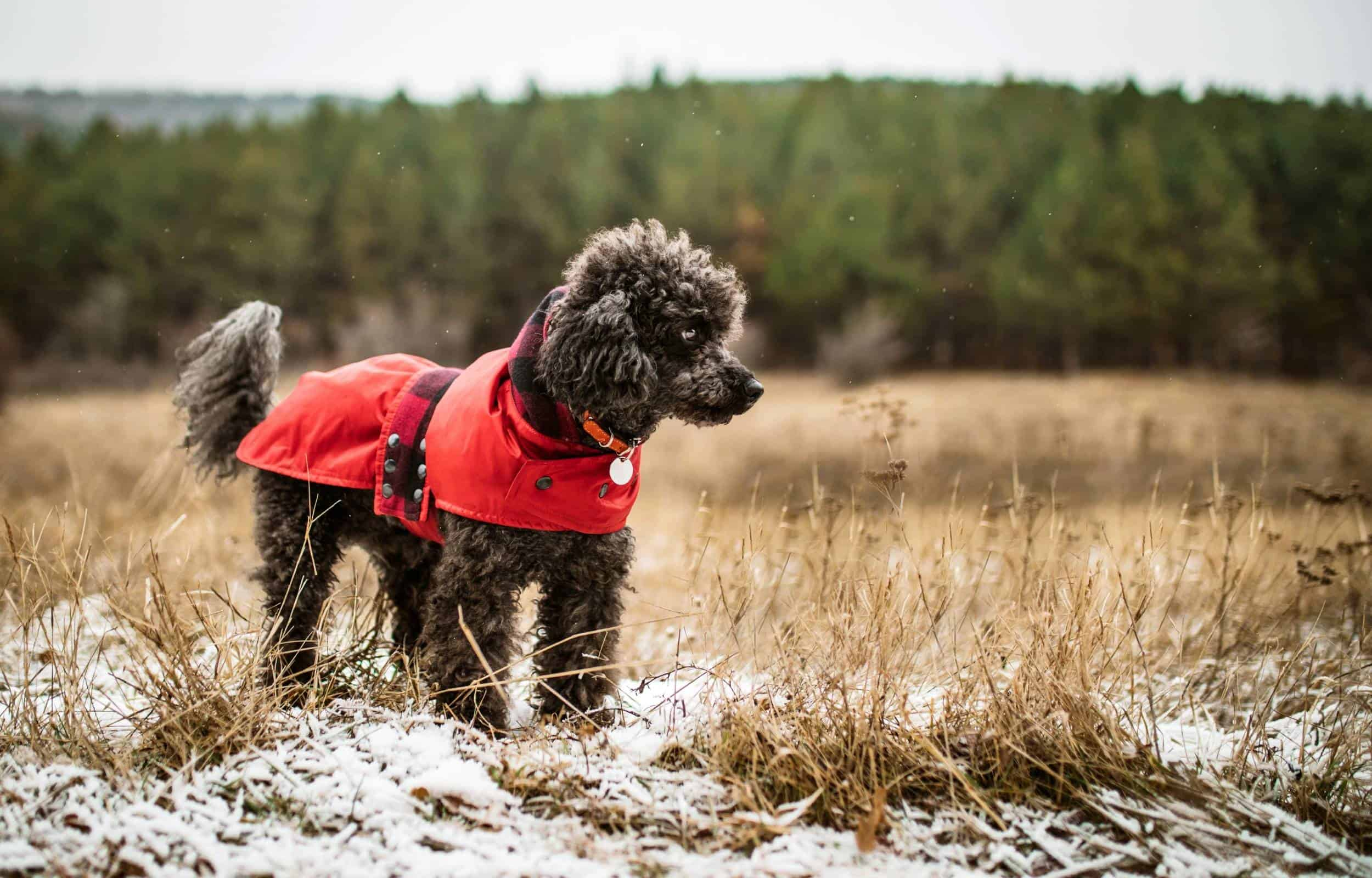 dog winter hiking jacket