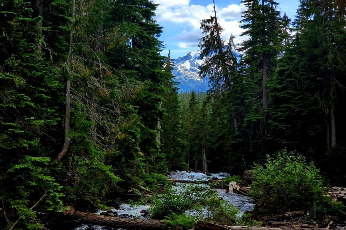 Callaghan Creek conflict lake trail